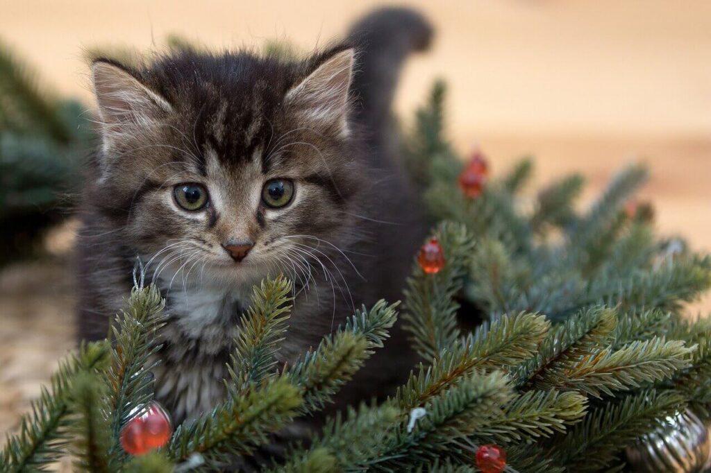 A karácsonyfa és a cica