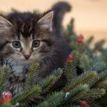 Karácsonyfa és a cica
